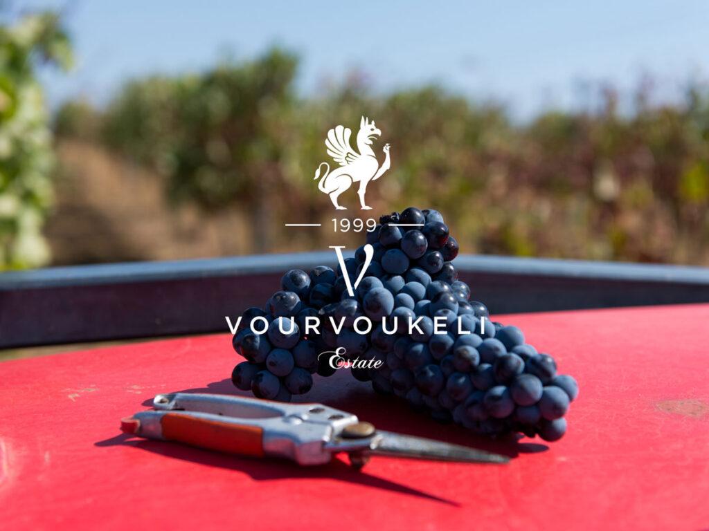 Αμπελώνας Βουρβουκέλη, Θράκη | Vourvoukeli Estate vineyard, Thrace, Greece.